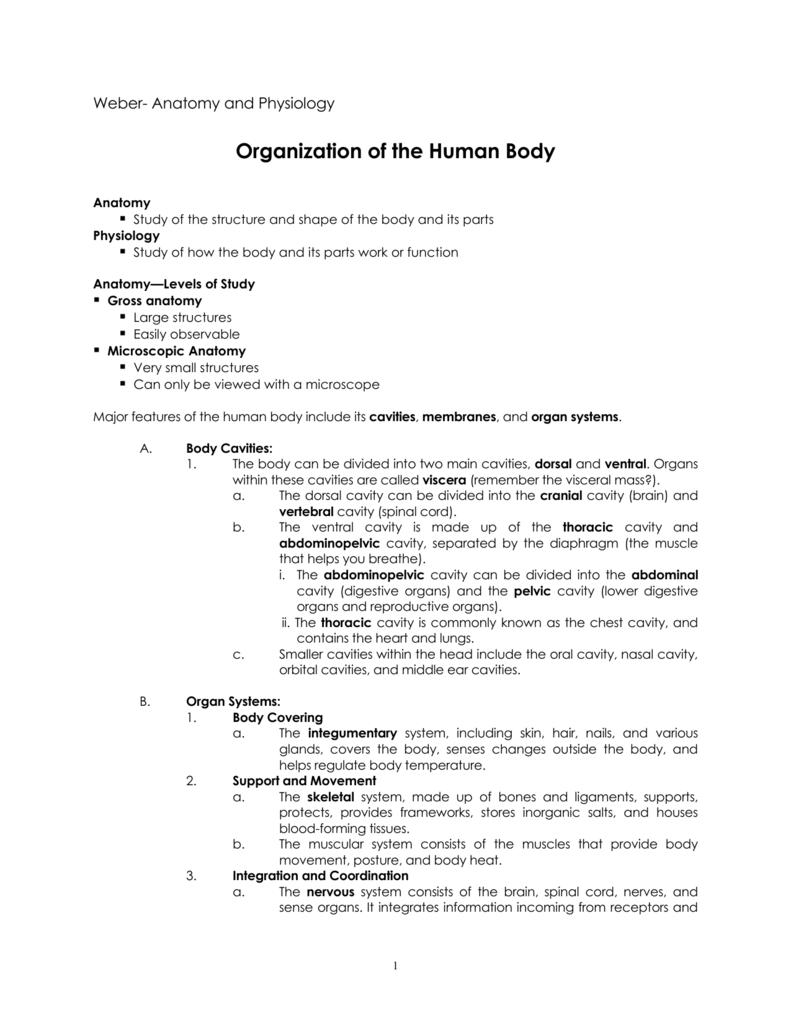 Summary Of Body Orientation Terminology