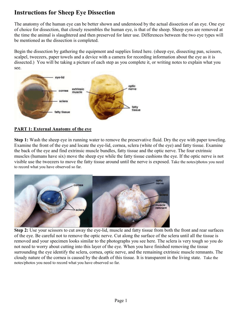 Instructions for Sheep Eye Dissection