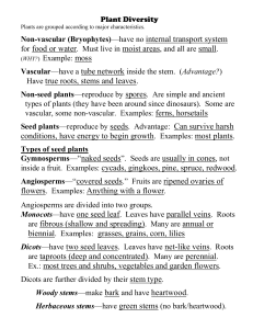 Types of seed plants - Southington Public Schools