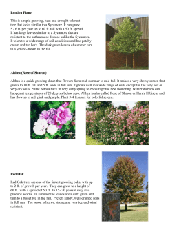 Information on trees and shrubs offered