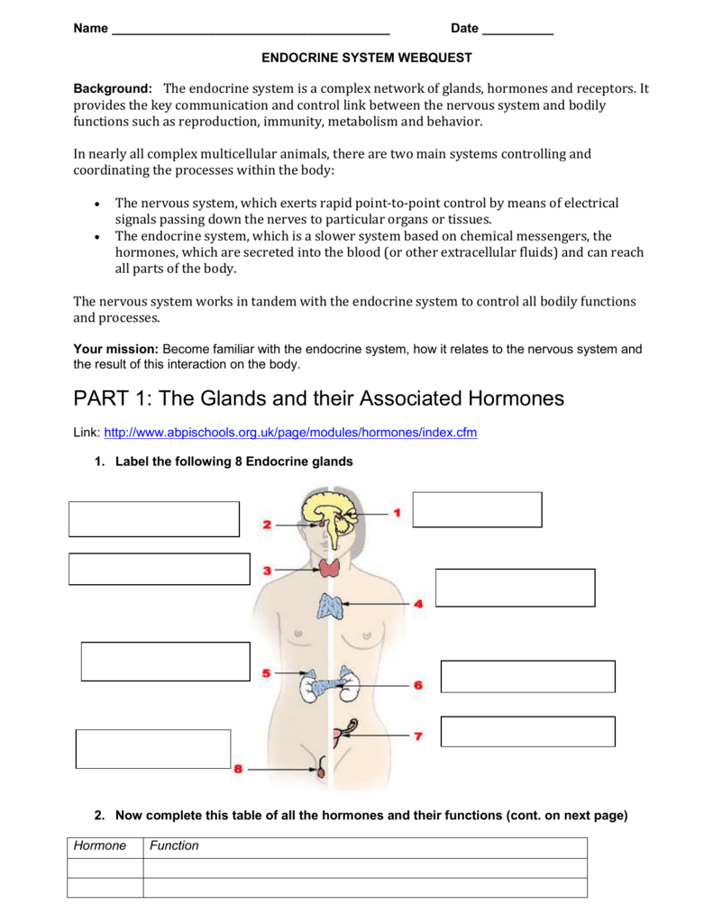 worksheet The Endocrine System Worksheet 008529630 1 cf5dae5807ef899c64a52f528899f4b4 png