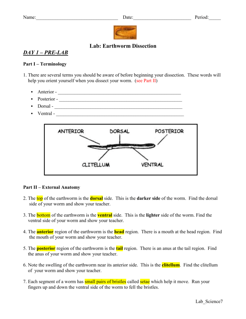 worksheet Earthworm Dissection Worksheet lab earthworm dissection