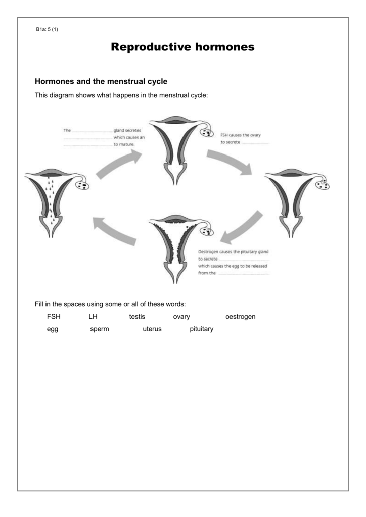 Menstrual Cycle Worksheets