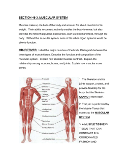 SECTION 46-3, MUSCULAR SYSTEM