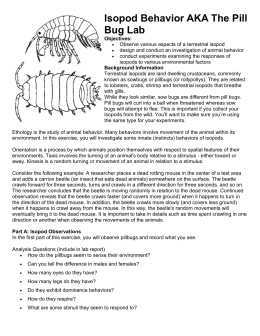 Pill bug report