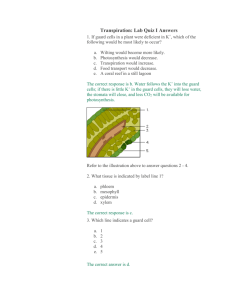 Transpiration: Lab Quiz I Answers