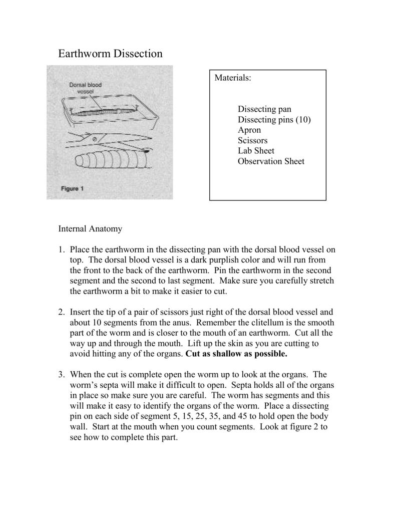 internal anatomy of an earthworm images learn human anatomy image