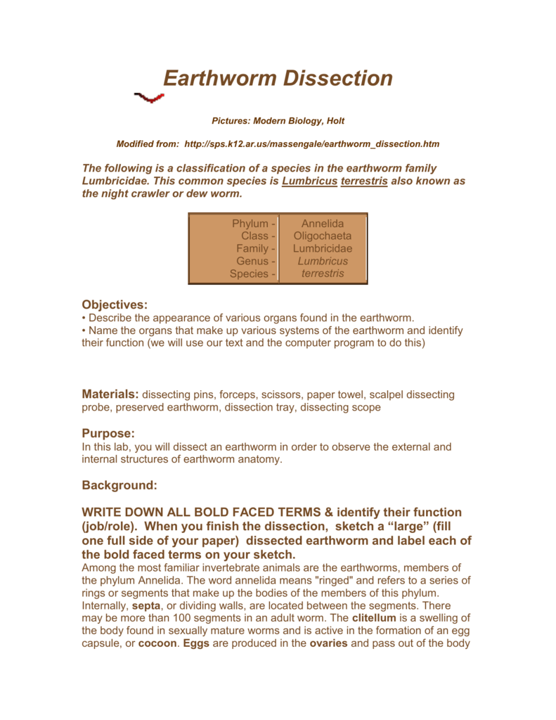 worksheet Earthworm Dissection Worksheet 008548912 1 66bf2d6f58d3a4109fa8b8bee2529329 png