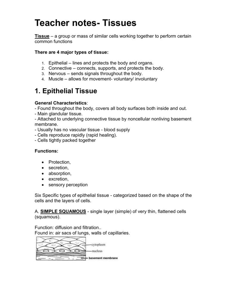Teacher notes – Epithelial Tissue Worksheet