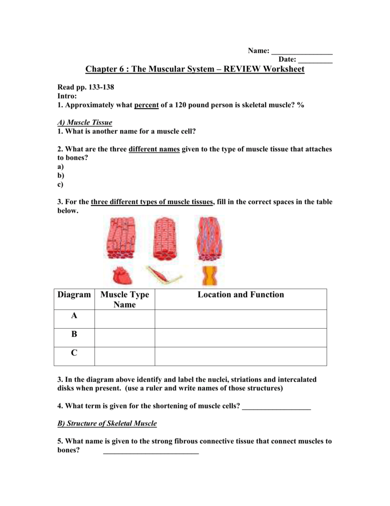 Chapter 6 Worksheet1 – Connective Tissue Worksheet