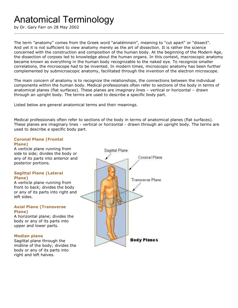 Human anatomical terminology College paper Academic Writing Service