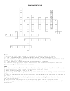 Photosynthesis crossword