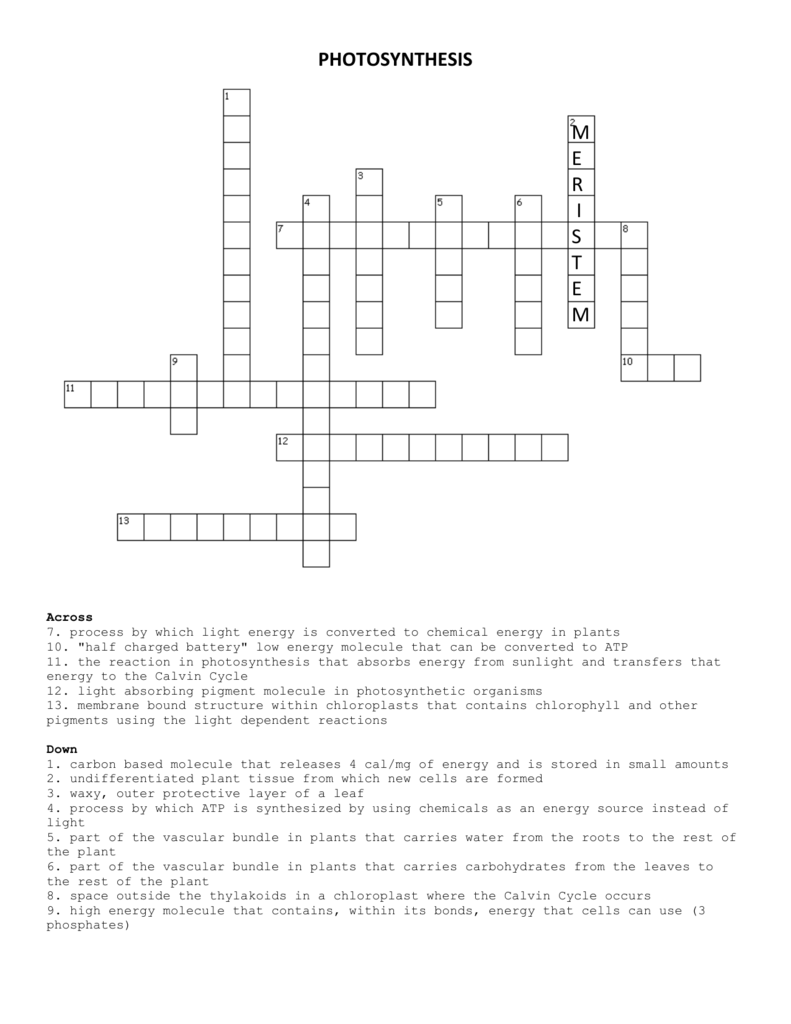Photosynthesis crossword ccuart Gallery
