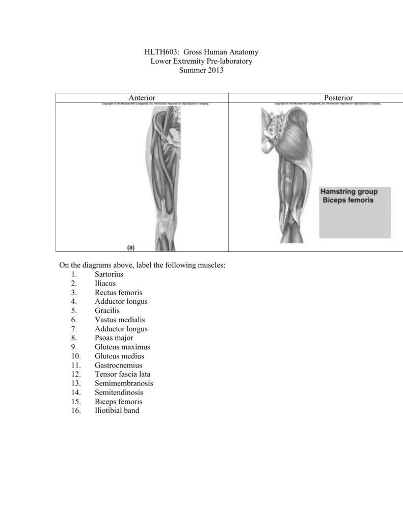 HLTH603: Gross Human Anatomy Lower Extremity Pre