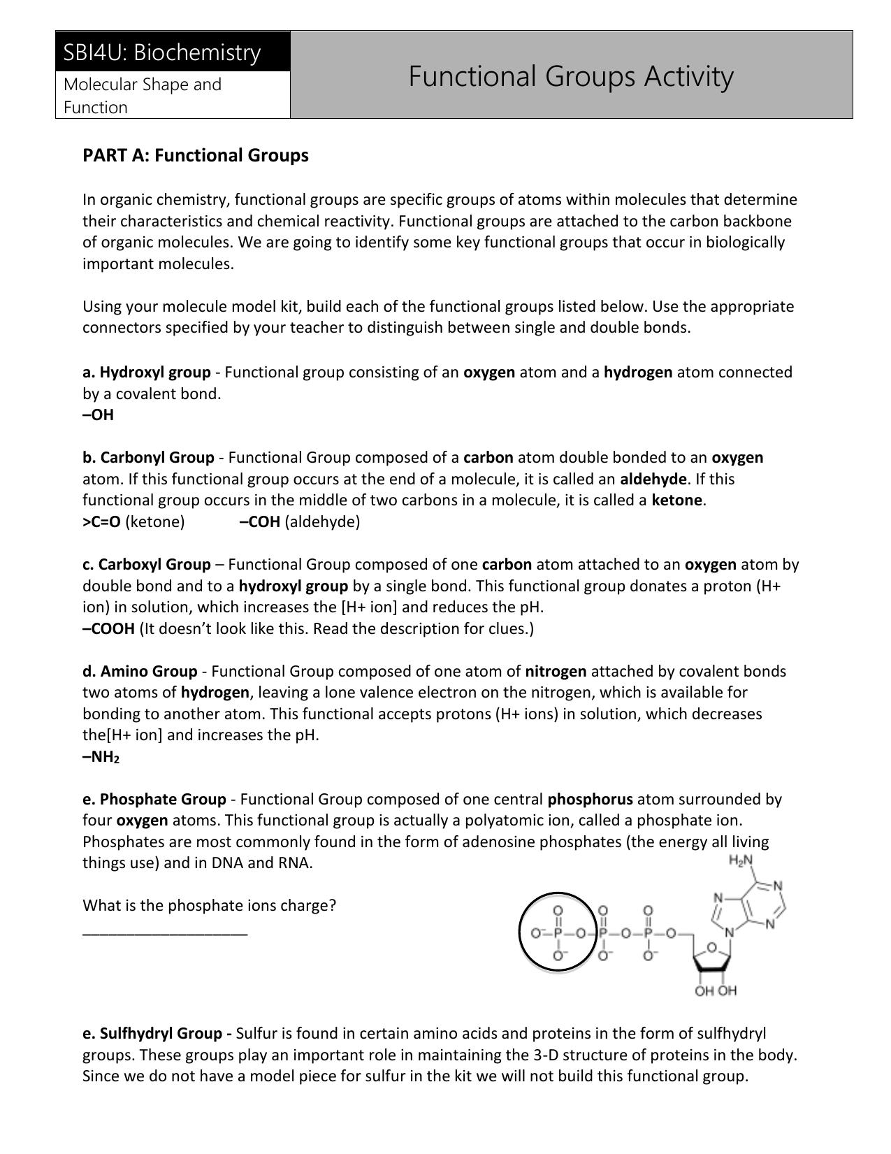 SBI4U: Biochemistry Functional Groups Activity Molecular Shape