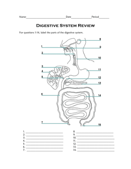 Digestive System Review - Mercer Island School District