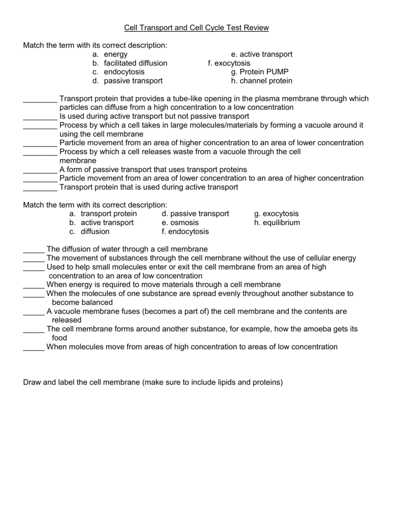worksheet Cellular Transport And The Cell Cycle Worksheet cell transport review worksheet
