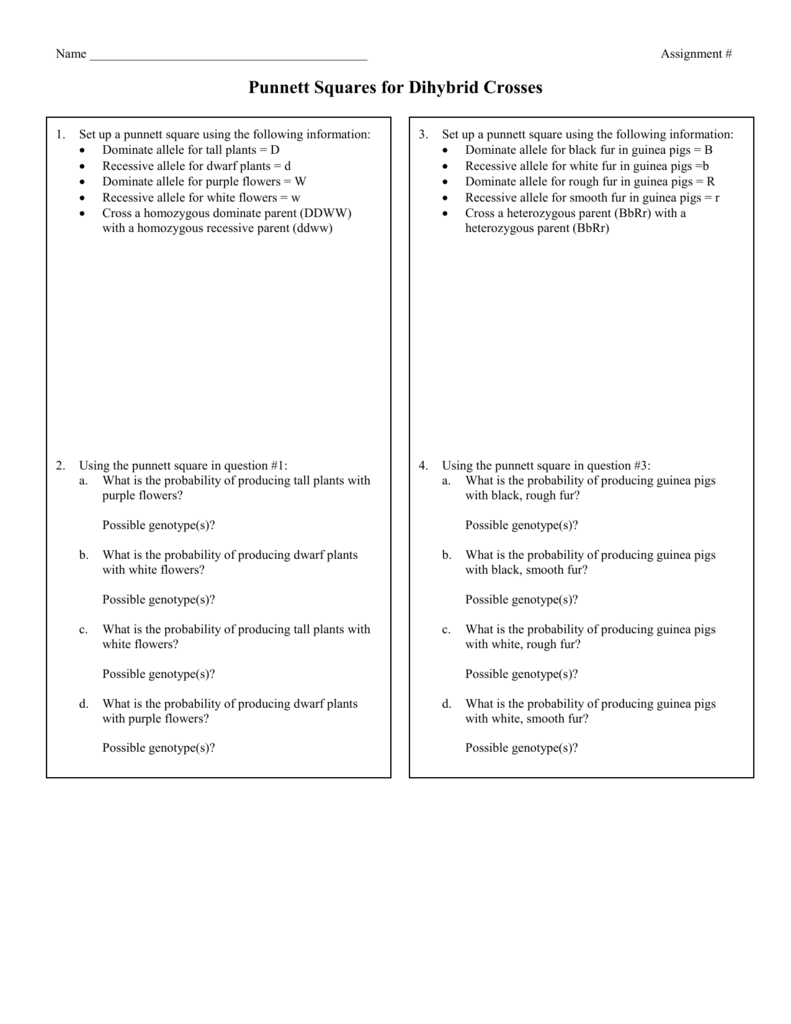 Punnett Square Dihybrid Worksheet 2015
