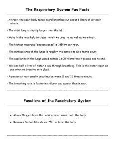 The Respiratory System Fun Facts