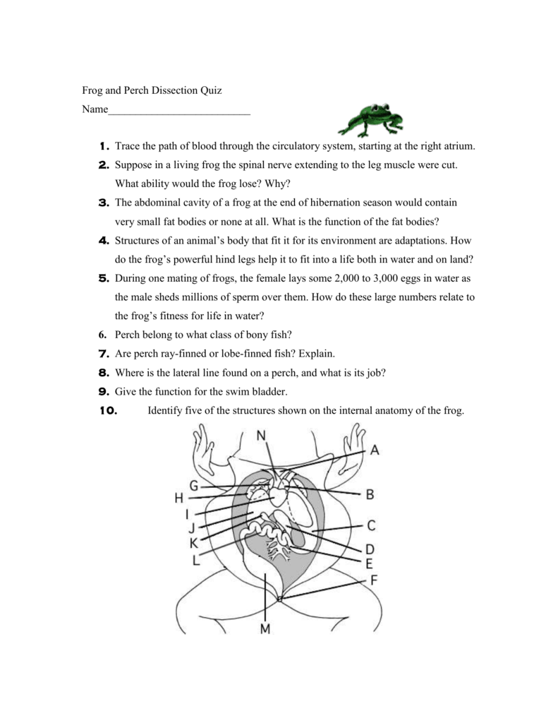 Bony Fish Anatomy Worksheet Choice Image - Human Anatomy Learning