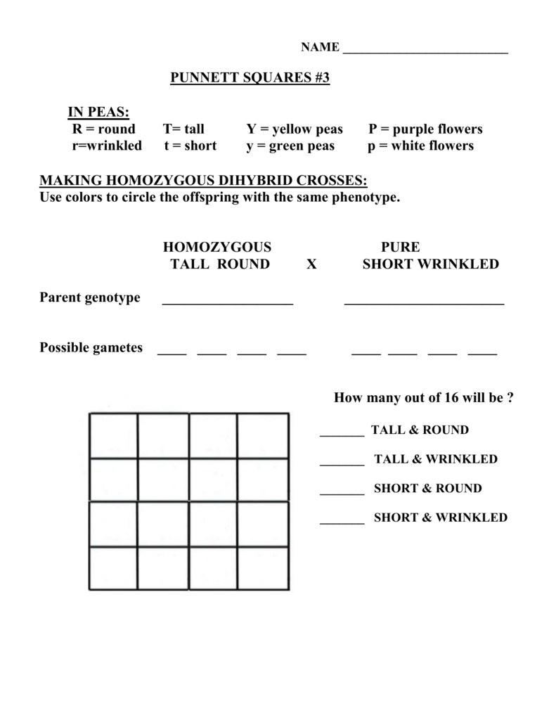 worksheet Dihybrid Punnett Square Worksheet punnett square practice 3