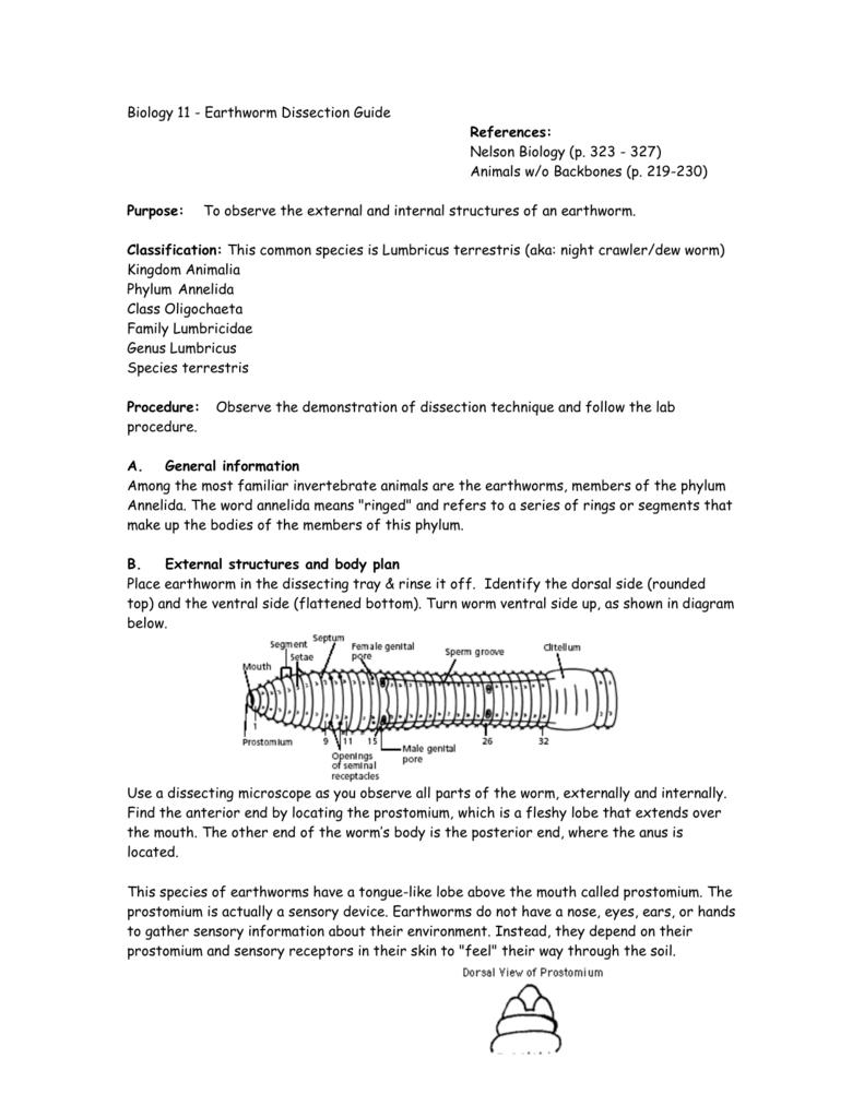 Earthworm Worksheet Answers Kidz Activities