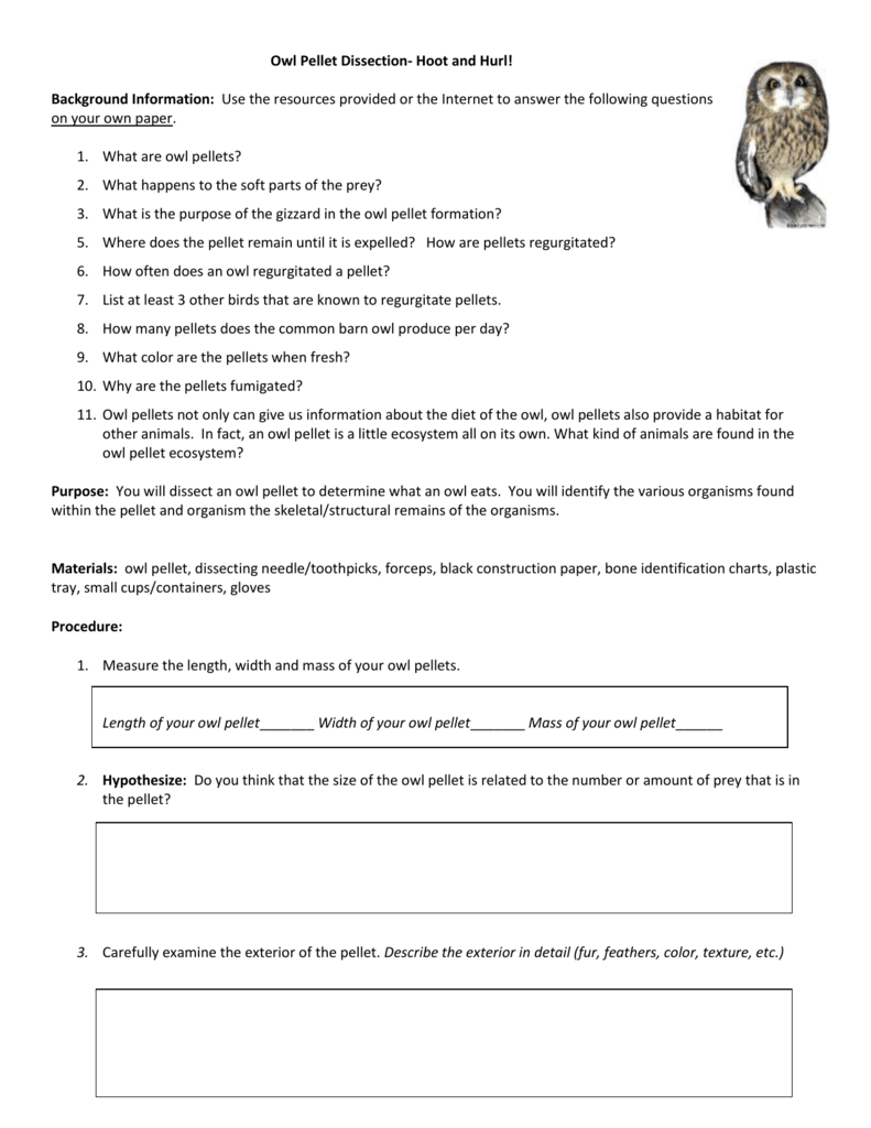 worksheet Virtual Owl Pellet Dissection Worksheet virtual owl pellet dissection