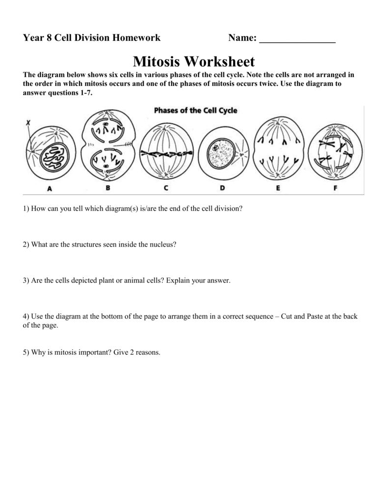 MITOSIS WORKSHEET – Cell Division Worksheet