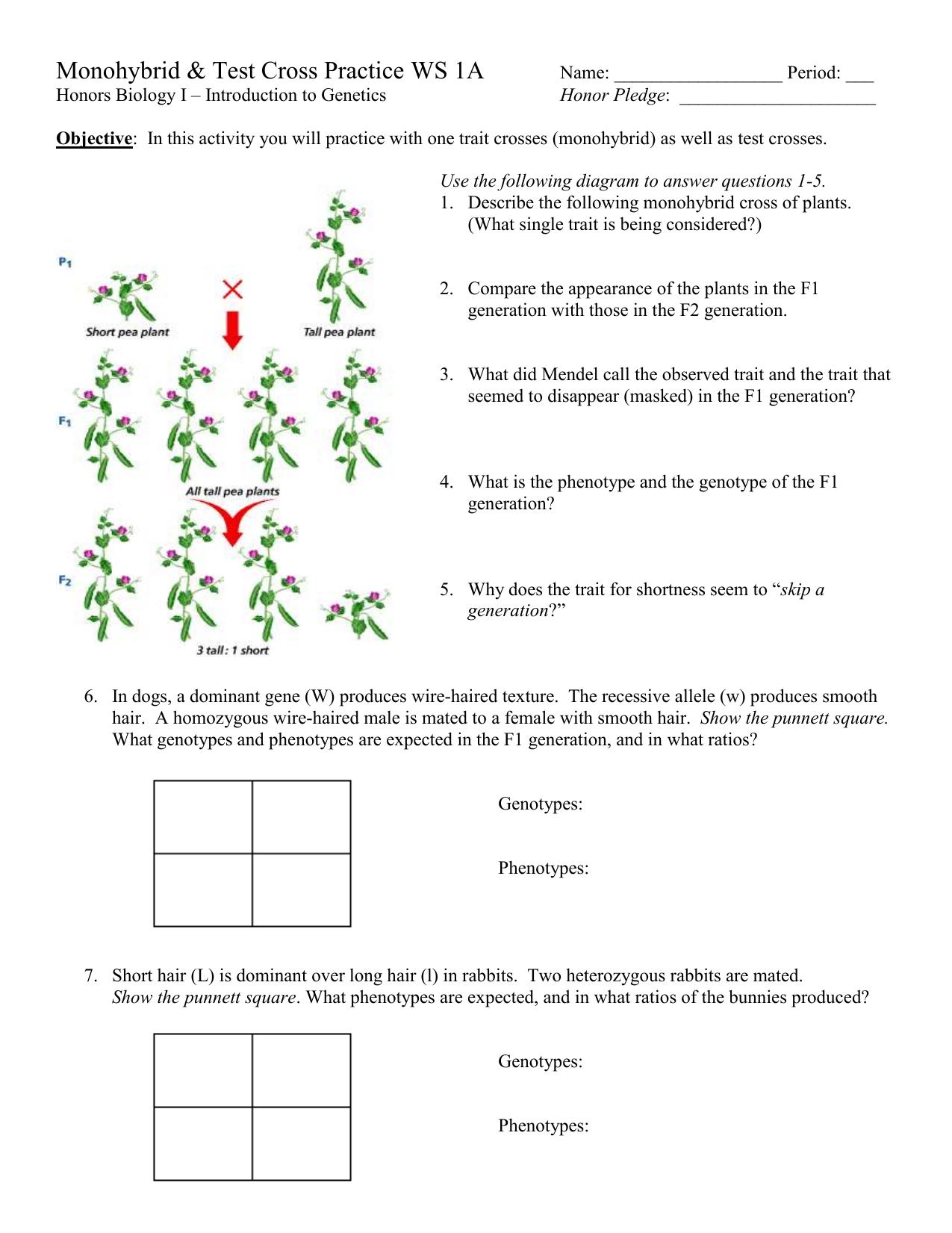 Monohybrid and Test Cross Practice