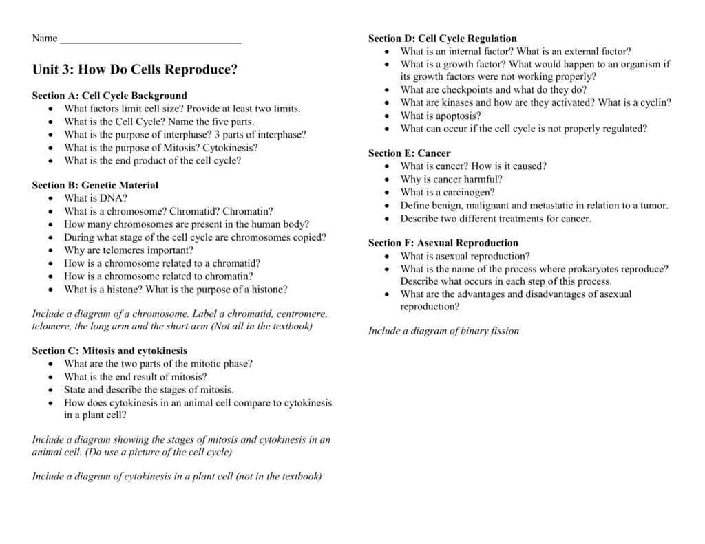 worksheet. Cell Cycle Regulation Worksheet. Grass Fedjp Worksheet ...