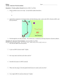 33 Protein Synthesis Simulation Worksheet Answers ...