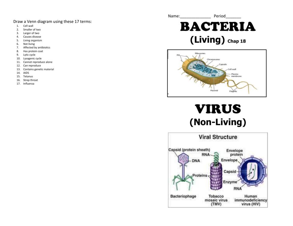 Bacteria virus booklet ccuart Choice Image