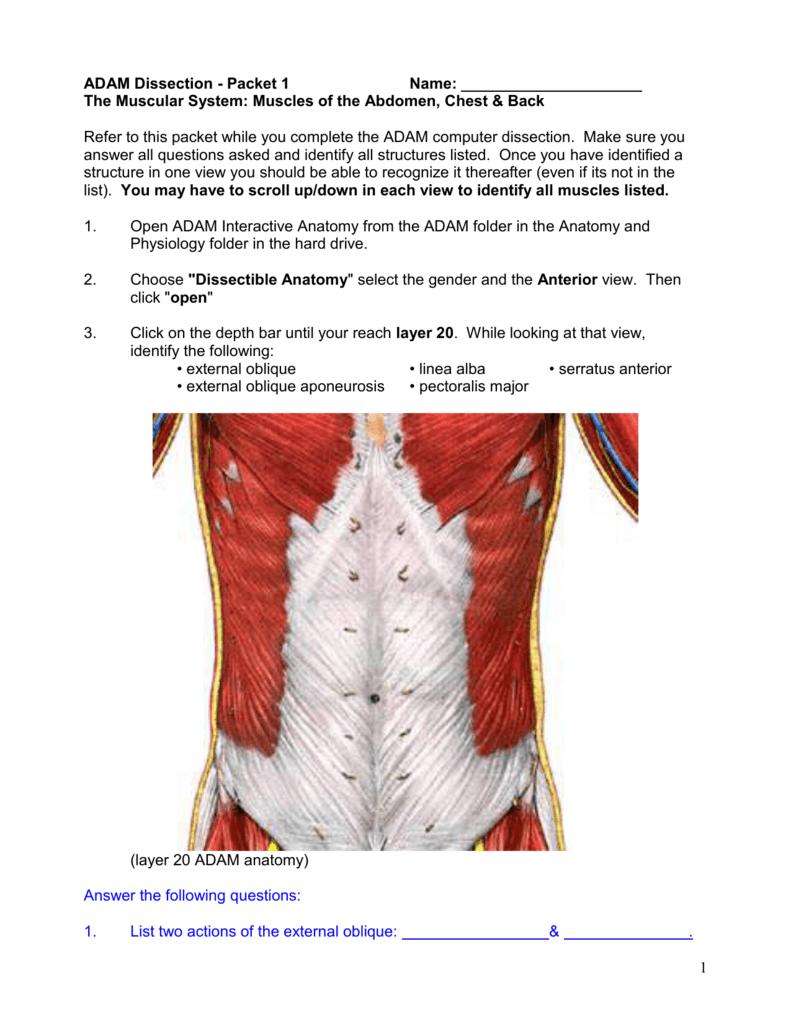 Moderno Adam Anatomy And Physiology Bosquejo - Anatomía de Las ...