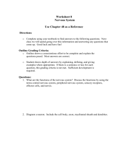 Nervous System Review Sheet