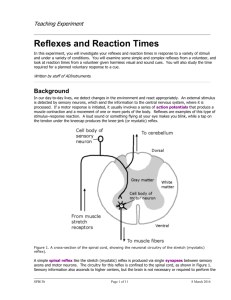 Reflexes and Reaction Times