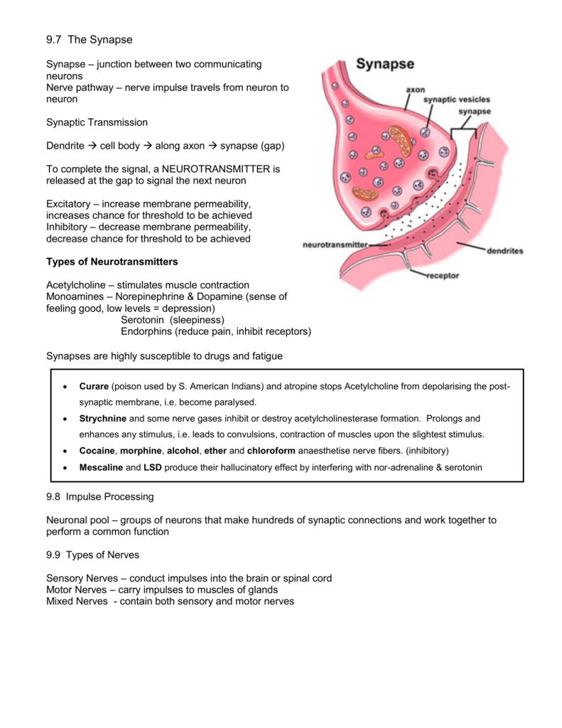 9 - The Biology Corner Biologycorner Worksheet Answers on