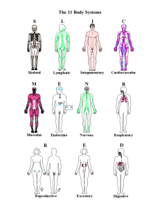 The 11 Body Systems