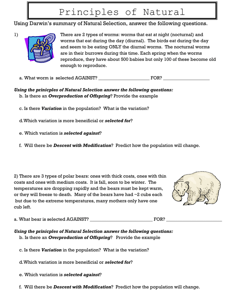 worksheet Natural Selection Worksheets free worksheets evolution by natural selection worksheet uncategorized worksheet