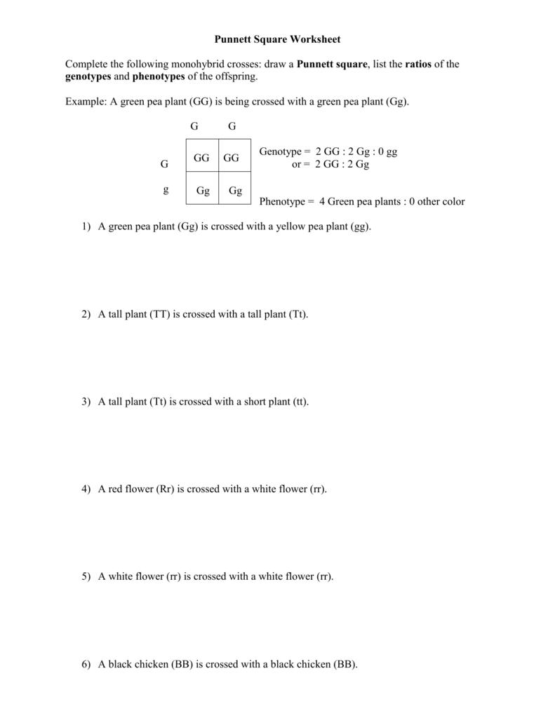 Punnett Square Worksheet Human Characteristics