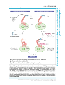 Enzymatic and non-enzymatic activation mechanisms of P AR