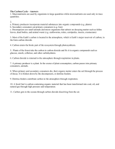 The Carbon Cycle _handout_ Answers