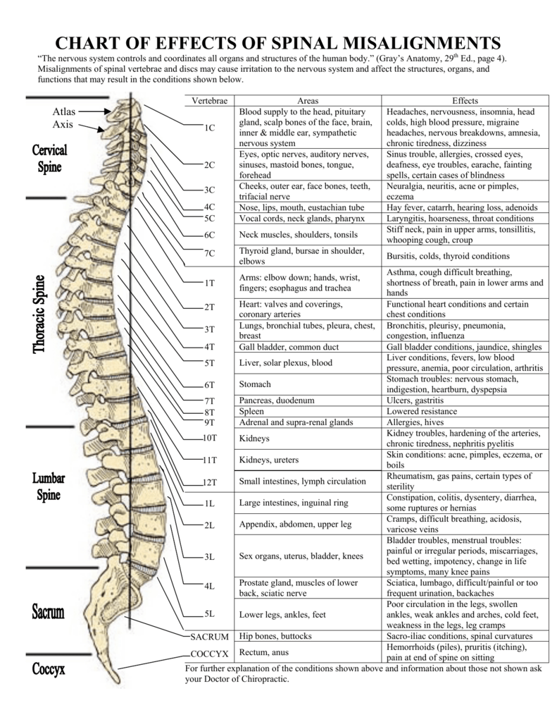 Image result for spine nervous system chart