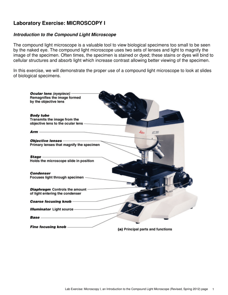 Laboratory Exercise Microscopy I