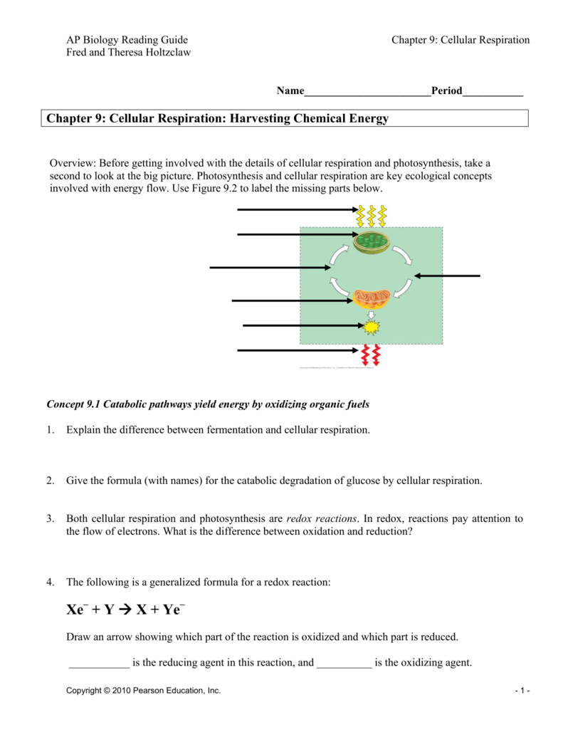 chapter 7 active reading guide cellular respiration and fermentation answer key