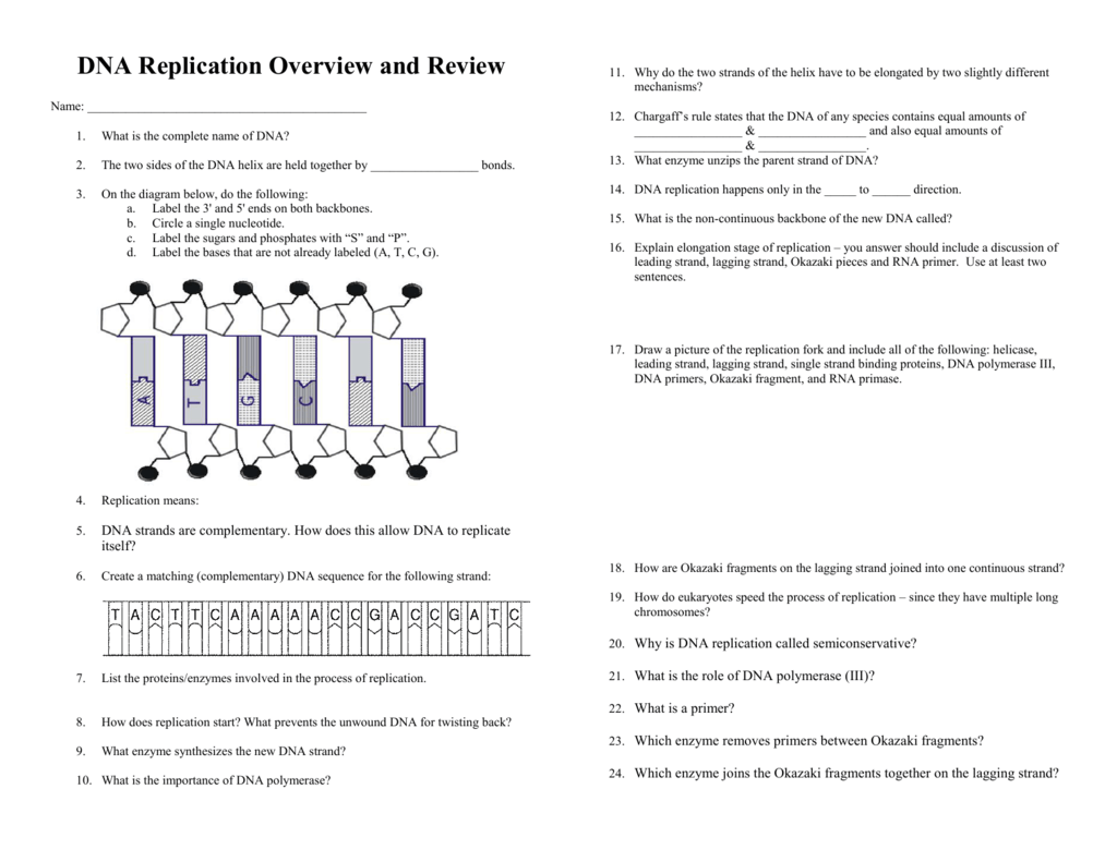 worksheet Dna Replication Review Worksheet 008659406 1 b0edf62a05f489bba39da79a6c92f256 png
