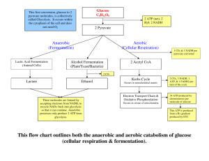 This flow chart outlines both the anaerobic and aerobic catabolism