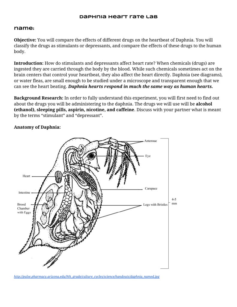 Daphnia Heart Rate Lab Name  Objective  You Will Compare The