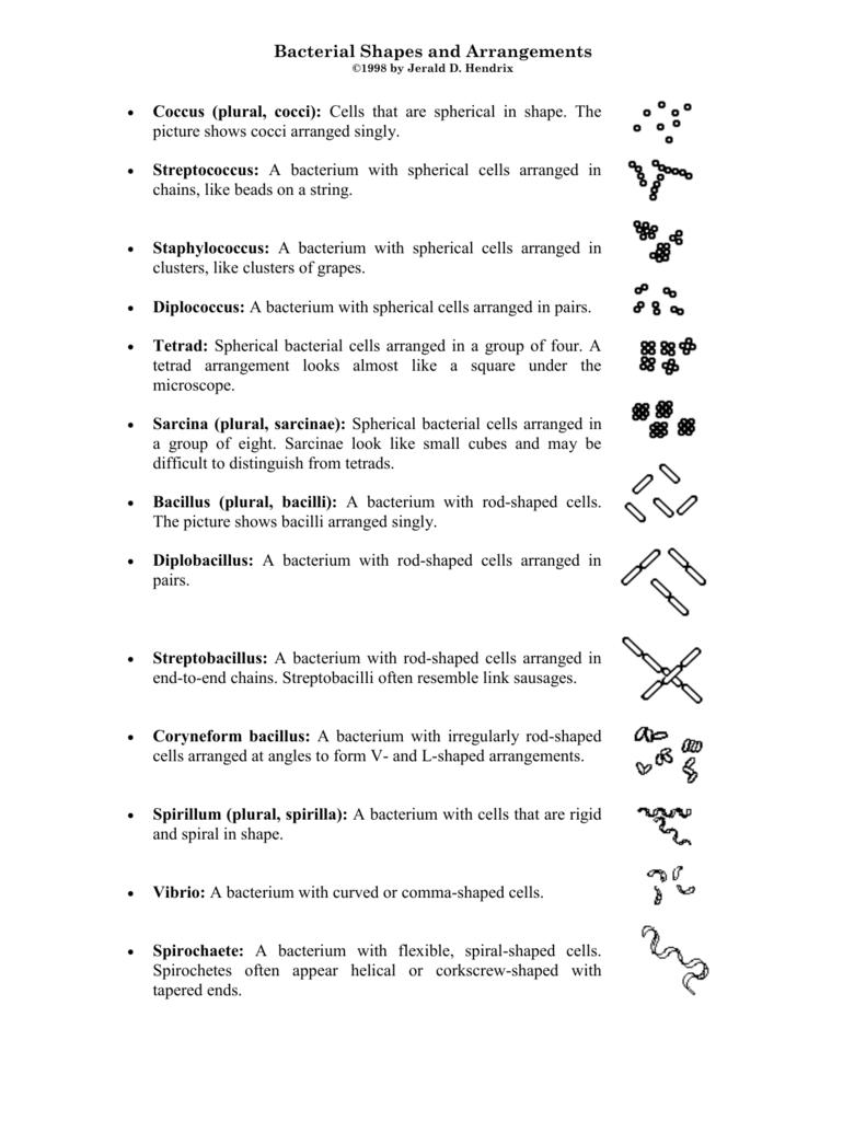 bacterial shapes and arrangements coccus plural cocci cells