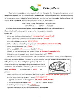 Chloroplasts worksheet chloroplast worksheets key ccuart Images