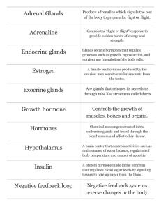 Endocrine System Worksheet Key